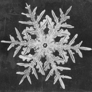 microscopic snowflake print by Wilson A. Bentley